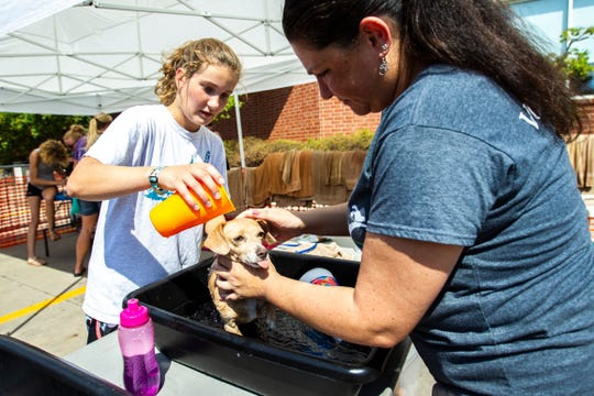 """Piper Radcliffe, 17, of Solon pours a cup of water over Trixie, a six year old """"Chiweenie"""" a mix of chihuahua and dachshund breeds, during the 14th annual Scrub Your Paws for a Cause Dog Wash, Sunday, Aug. 4, 2019, at Hy-Vee on First Avenue in Iowa City, Iowa."""