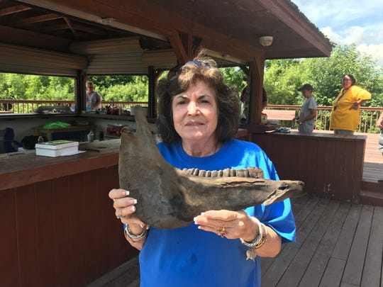 Mary Kivi, Little Rock Lake Association vice president, poses with a large jaw found after the water levels dropped. Volunteers are unsure of what type of animal jaw it is.