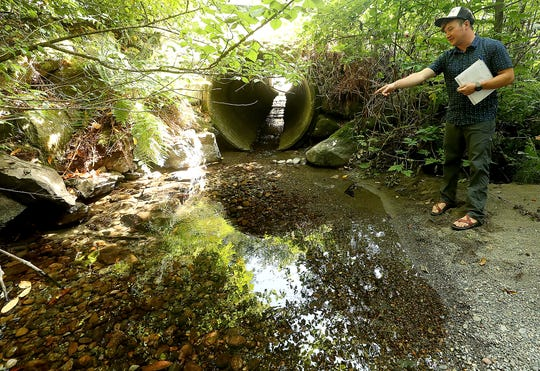 Gus Johnson, project manager with Hood Canal Salmon Enhancement Group, points out salmon that are trapped in the shallow water of Seabeck Creek between an old fish ladder and a culvert running underneath Seabeck Holly Road on Monday.