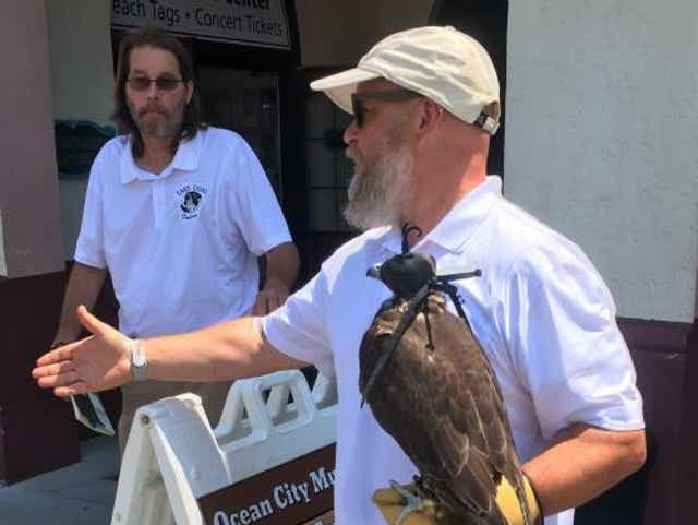 Ocean City Nj Chases Off Aggressive Seagulls With Falcons Other Birds Of Prey