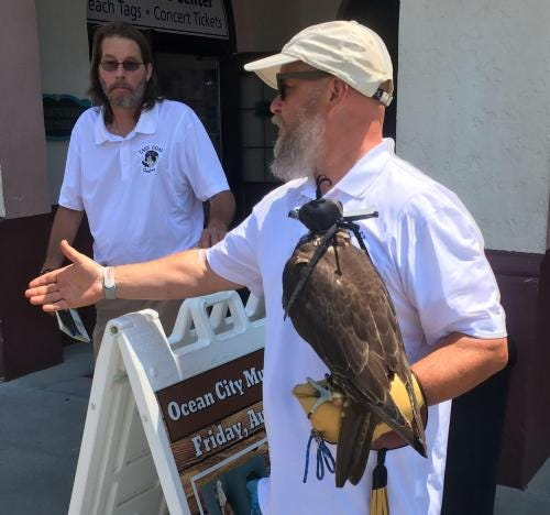 Staff from East Coast Falcons are deploying birds of prey to chase away aggressive seagulls in Ocean City.