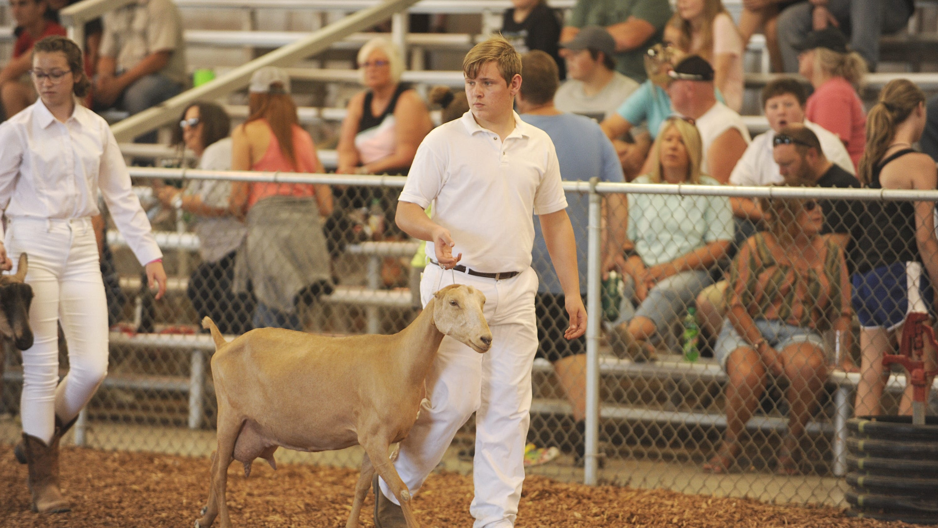 Local Students Show Off In 2019 Ross County Fair Goat