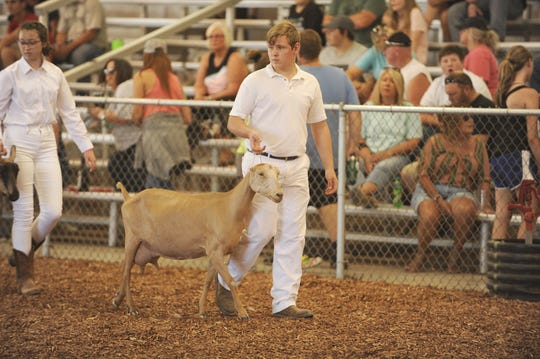 Southeastern High School's Keagan Stewart won the Dairy Senior Showmanship championship at the 2019 Ross County Fair on Sunday August 4, 2019. Stewart is a part of the Born in a Barn 4-H club.