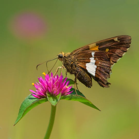 """Birth of a Butterfly,"" for ages 4 to 6, will be presented from 10:30 a.m. to noon on Monday, Aug. 12, at The Somerset County Park Commission Environmental Education Center, 190 Lord Stirling Road, in the Basking Ridge section of Bernards."