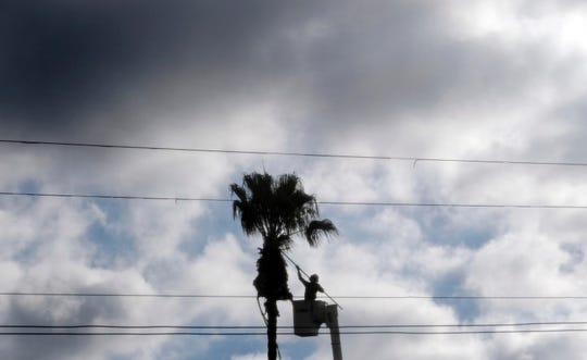 A worker trims fronds from a palm tree in the Los Feliz section of Los Angeles.