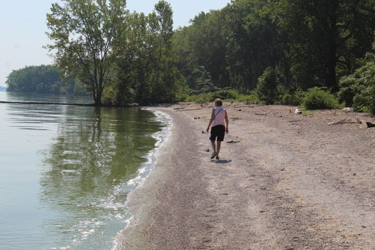 Mary Beth Byers of Tiffin looks for beach glass on Magee Marsh Wildlife Area's beach Monday. A green algal bloom could be seen in Lake Erie waters along the wildife area's shoreline.