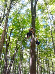 The Natural Resources Foundation of Wisconsin's Wayfarers group hosts a tree climbing event at Riveredge Nature Center in Saukville.