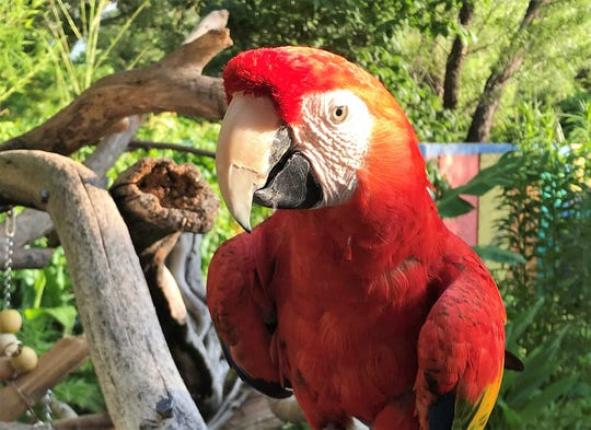 """Pints for Parrots"" is 4 to 8 p.m. Aug. 10, 2019, at the Naples Zoo in Florida."