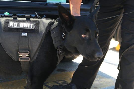 K-9 Keno in his old protective stab vest. August 2, 2019.