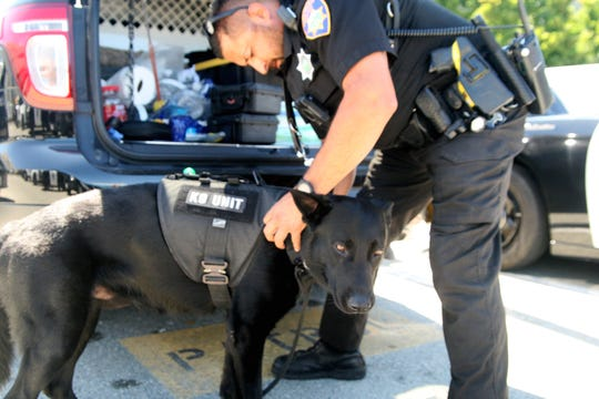 Ofcr. Carlos Rios puts K-9 Keno's old protective stab vest on him. August 2, 2019.