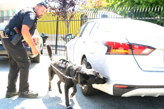 K-9 officer Keno sniffs out narcotics his partner, Ofcr. Rios, has hidden so Keno can practice. August 2, 2019.
