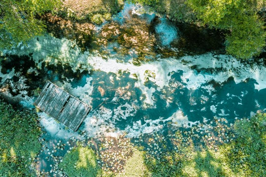 Florida's springs, like Rock Springs Run, shown above, face challenges due to rising nutrient levels and diverted flows.