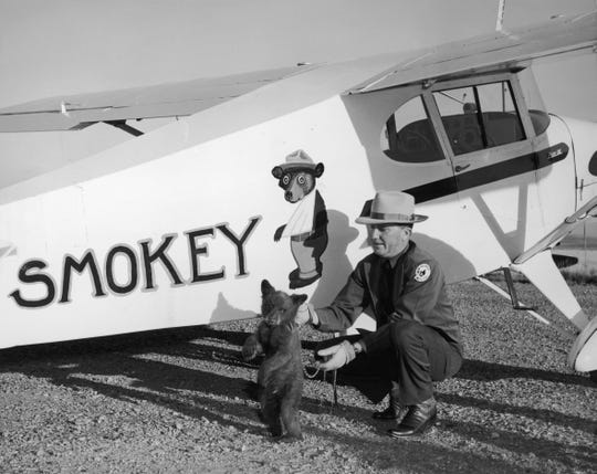 Smokey the bear cub is flown from Santa Fe, New Mexico, to his new home at the Washington National Zoo in a Piper J-3 Cub, by New Mexico's Assistant State Game Warden Homer C. Pickens in 1950.