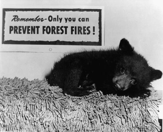 A little bear was rescued from a forest fire in 1950 with badly burned paws and hind legs. He was named Smokey and became the live version of the fire prevention mascot.