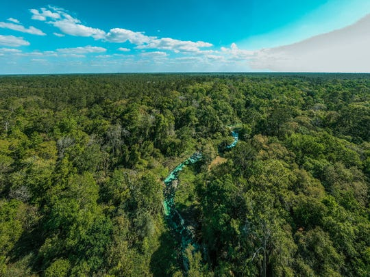 Although Rock Springs Run State Reserve is only about 40 miles from Orlando, the tranquility will make you feel like you're in the Amazon instead of central Florida.