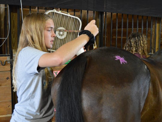 Mckenna Thompson, 13, of Lope, Raddle & Roll 4-H club prepares her horse, Rhea, for the Jr. Fair Horse Show on Tuesday.