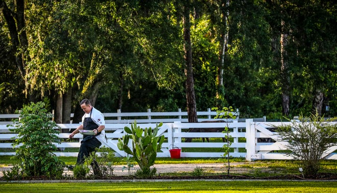 Chef Richard Howze looks for fresh produce to harvest from the gardens along the grounds of Rosy Tomorrows in North Fort Myers.