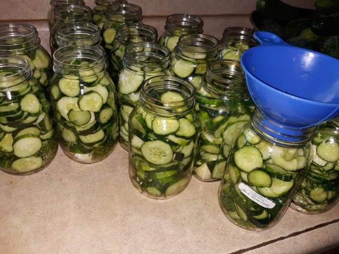 Jars of sliced cucumbers ready to be filled with pickling brine and then canned. Lovina had a bounty of cucumbers from the garden that were ready to be canned. This week, she shares a recipe for homemade vegetable juice, which she will soon make as her many tomatoes ripen.