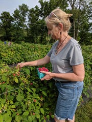 """Dandy's Shrubs and Switchels Food Innovator Amy Pausch picks raspberries for the shrub """"All That Razz."""""""