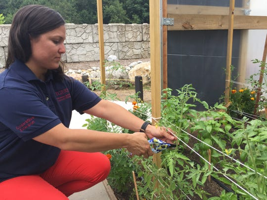 Cecilia Díaz, program associate for Rutgers Cooperative Extension of Passaic County, prunes a tomato plant in the high tunnel.