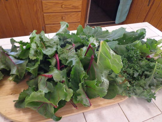 Here are some greens from my garden waiting to go into the soup pot for a super nutritious boost.
