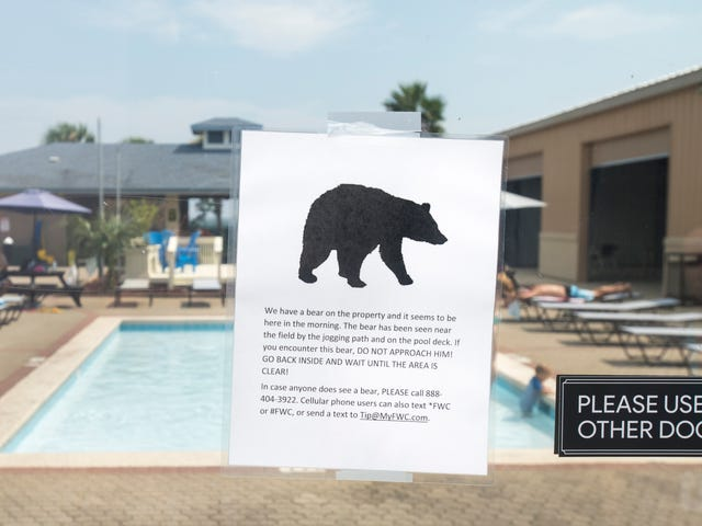 FWC urges Santa Rosa County residents to use bear-resistant trash