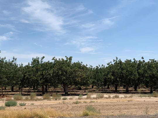 An orchard across the street from the aluminum smelting plant's proposed site.