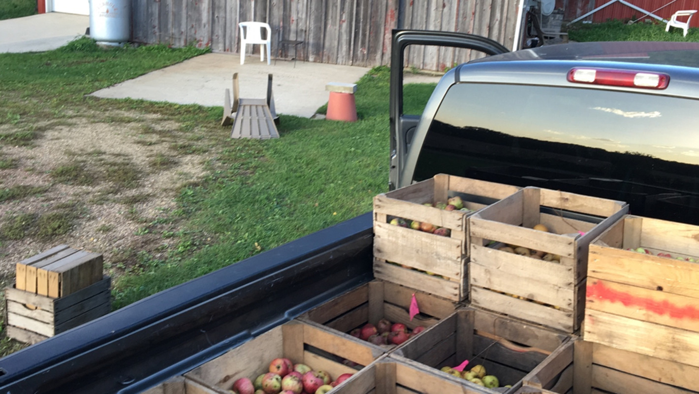 Heritage Midwestern apples debut comeback in new cider