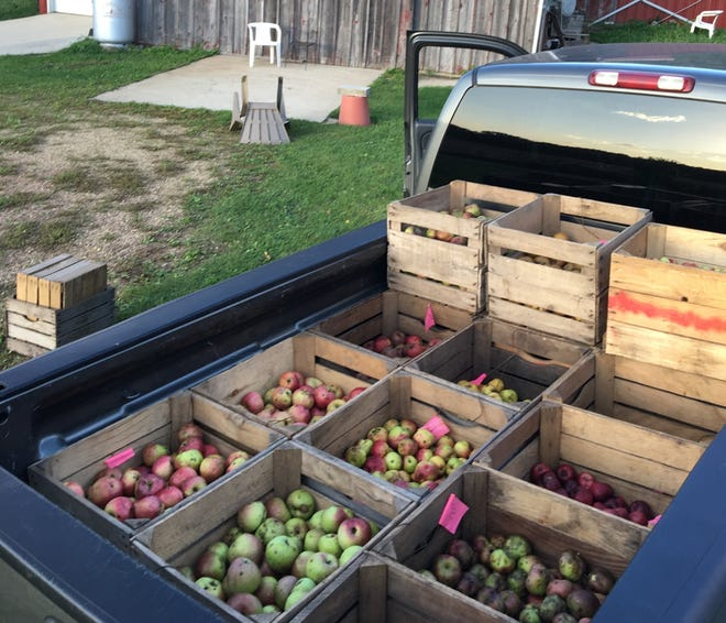 Brix Cider is using Midwestern apple varieties that were once essentially lost to history.