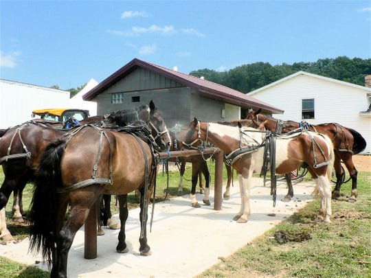 The horses that will pull the buggies carrying their Amish owners home back home again patiently wait outside.
