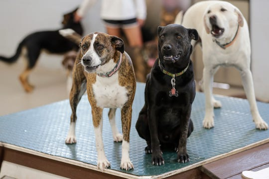 Socialize your pet while meeting other dog lovers at this weekly indoor dog meet-up at Venus de Fido