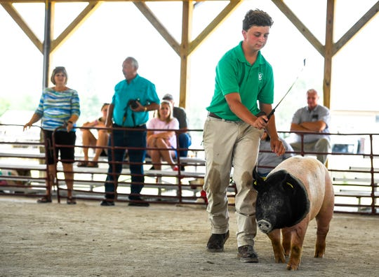 Henderson County High freshman Logan Darnell guides one of his hogs in the show ring at the Henderson County Fair AG-Days Livestock Show Saturday, August 3, 2019.