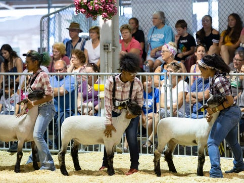 Tia Belle-Anderson, from left, 17, Raynhia Robinson, 16, and Kristine Blackwell, 17, of Vincent High School hold their lambs' heads steady while presenting in class four of the Hampshire division in the Market Lamb Show at the Wisconsin State Fair on Wednesday. Belle-Anderson placed eighth, Robinson placed 10th and Blackwell placed ninth in the competition.
