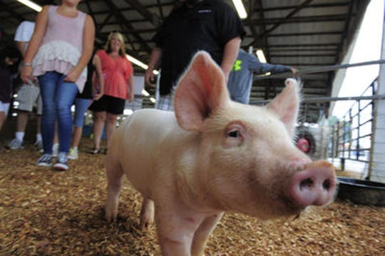 Animals are a regular attraction at the Wilson County Fair, which plans even more of an emphasis this year.