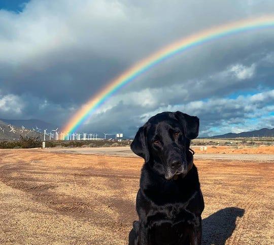 Sheriff's K-9 unit dog Jax dies of seizures  He often found jail contraband