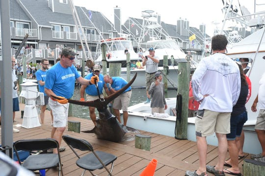 This big blue marlin was brought to the scales Wednesday, Aug. 7, 2019, at the White Marlin Open but it didn't qualify because it wasn't long enough.