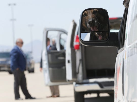 A police dog stands ready to help on Wednesday, Aug. 7, 2019, at the El Paso International Airport.