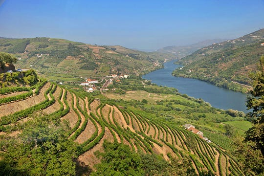 The Douro Valley's hillsides in Portugal are lined with stepped terraces built over the centuries and more modern large, smooth terraces, with vines planted in vertical rows.