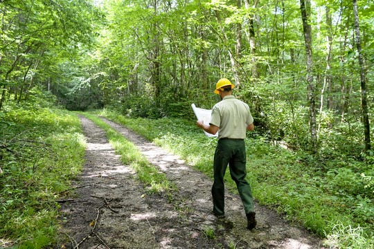 Jason Herron, environmental coordinator with the U.S. Forest Service's Pisgah Zone, walks along Fall Branch Road in Harmon Den while looking at the map of the Twelve Mile Timber Project July 24, 2019.
