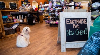 Earthwise Pet Corpus Christi sells dog and cat food that have no by products, corn, wheat, soy or other fillers.