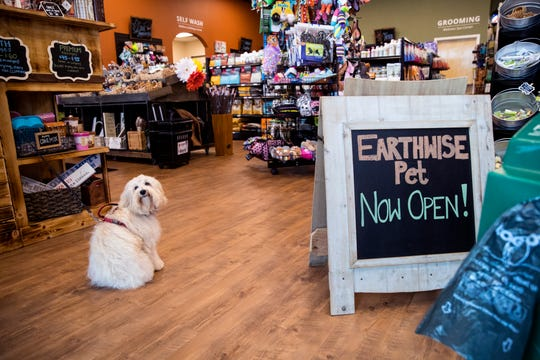 Jolene, a Bichon Frise, waits for her owner to pay at Earthwise, a new pet supply store on the Southside on Thursday, August 8, 2019.