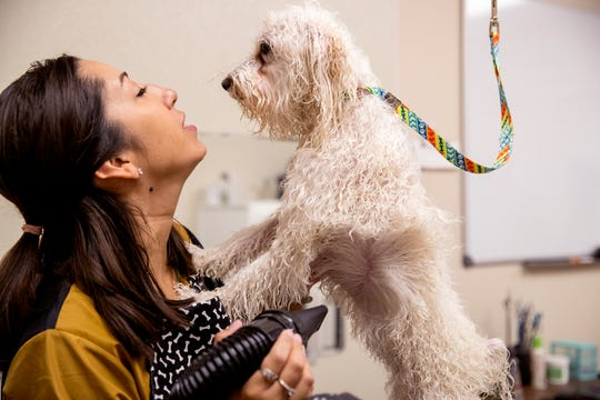Earthwise groomer Bianca Chadis grooms Darla, a Bichon Frise, on Thursday, August 8, 2019. Earthwise is a new health-conscious pet supply store on the Southside and also features grooming and a self-wash station.