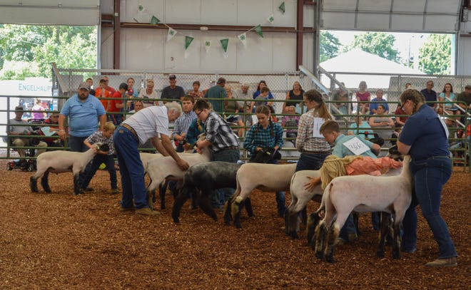 With all eyes on them, exhibitors at the Ross County Fair ensure that they look clean cut while presenting their animals during the Jr. Fair Market Lamb Judging on Wednesday.