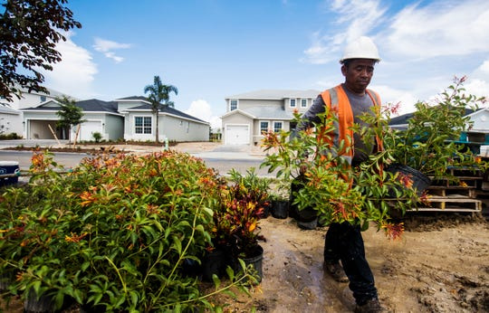 Francisco Oxlaj plants foliage at a new home at the town of Babcock Ranch on Tuesday August, 6, 2019.