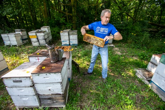 Tracy Hunter carries a strip of honey combs while checking on a bee hive at Hunter's Honey Farm, Tuesday, August 6, 2019, in Martinsville, IN.