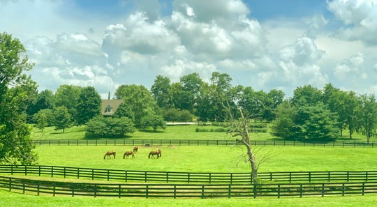 Kentucky Derby Museum has partnered with Unique Horse Farm Tours to offer up close and personal visits at horse farms in Lexington and at Churchill Downs racetrack and the Kentucky Derby Museum in Louisvlile