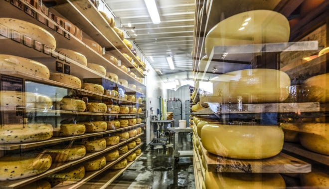 Aged cheeses are seen through a window at Marieke Gouda in Thorp, Wisconsin. Certain cheeses, the hard aged varieties such as cheddar, Gouda, Parmigiano-Reggiano, and Swiss actually have very little lactose.