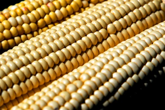 Ears of corn are displayed, Thursday, Aug. 8, 2019, on a booth about Native American agriculture at the Northwest New Mexico Local Food Summit in Farmington.