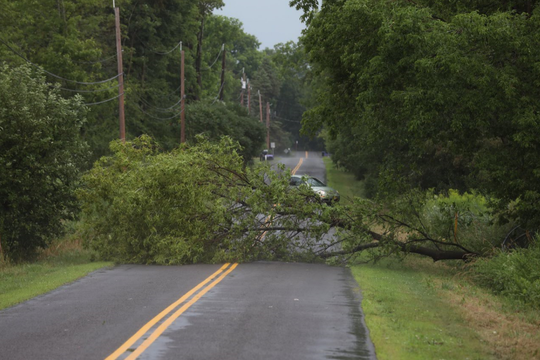 Tree down Kennedy Rd. east of Salt Rd. in Penfield