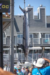 The crew of the Fish Whistle, out of Indian River, captured thi 79.5-pound white marlin to take the lead at the White Marlin Open on Thursday, Aug. 8, in Ocean City.